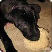 Adopt A Pet :: BAXTER - Palm Coast, FL