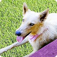 Adopt A Pet :: Jazmyn needs foster asap - Sacramento, CA
