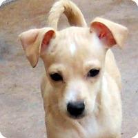 Adopt A Pet :: Baby Ramona - Oakley, CA