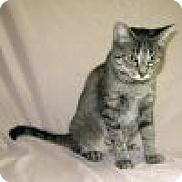 Adopt A Pet :: Felicity - Powell, OH