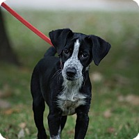 Adopt A Pet :: Sam*ADOPTED!* - Chicago, IL