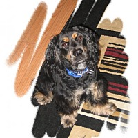 Adopt A Pet :: Bobby - Rigaud, QC