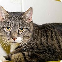 Adopt A Pet :: Ana - Waldorf, MD