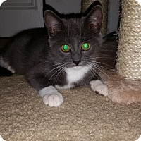 Adopt A Pet :: Fiona - Turnersville, NJ