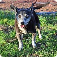 Adopt A Pet :: Tutu - Palo Alto, CA