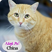 Adopt A Pet :: China - West Des Moines, IA