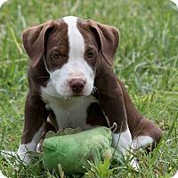 Adopt A Pet :: Adrienne - Broken Arrow, OK