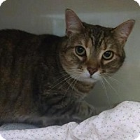 Adopt A Pet :: Camille - Bloomingdale, IL