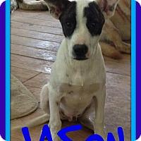 Adopt A Pet :: JASON - Sebec, ME
