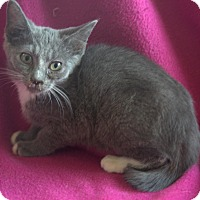Adopt A Pet :: Gail - Allentown, PA
