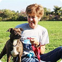 Adopt A Pet :: Brody Bo Dean - Elyria, OH