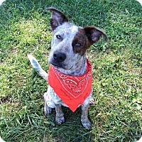 Adopt A Pet :: Rugby - Lexington, NC
