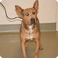 Adopt A Pet :: Doug - Wildomar, CA