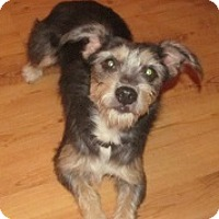 Adopt A Pet :: Muffy - Glenwood, GA