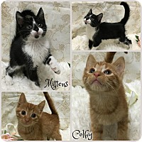 Adopt A Pet :: Colby - Joliet, IL