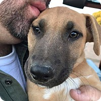 Adopt A Pet :: Waker Glass - Brooklyn, NY