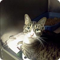 Adopt A Pet :: marcus - Muskegon, MI