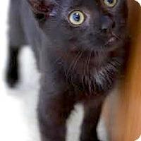 Adopt A Pet :: Mason - Montclair, NJ