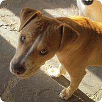 Adopt A Pet :: Kensi - Santa Fe, NM