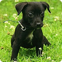 Adopt A Pet :: Mattie - Staunton, VA