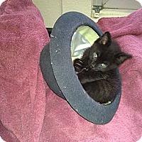 Adopt A Pet :: Dr. Pepper - Wakinsville, GA
