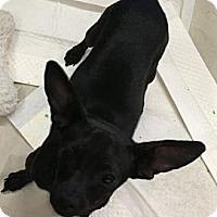 Adopt A Pet :: Goose - Vista, CA