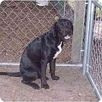 Adopt A Pet :: Cole - Groveland, FL