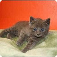 Adopt A Pet :: JUAN - SILVER SPRING, MD