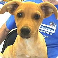 Adopt A Pet :: John Boy - Phoenix, AZ