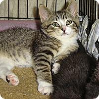 Adopt A Pet :: Robbie - Mundelein, IL