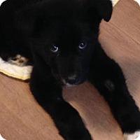 Adopt A Pet :: Missy - Saskatoon, SK