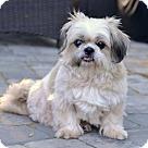 Adopt A Pet :: Shelly