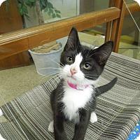 Adopt A Pet :: Charlotte - Medina, OH