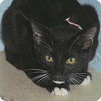Adopt A Pet :: Victor - Englewood, FL