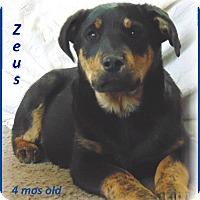 Adopt A Pet :: Zeus - Marlborough, MA