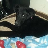 Adopt A Pet :: Lady - West Allis, WI