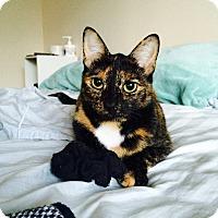 Adopt A Pet :: Greta - Columbus, OH