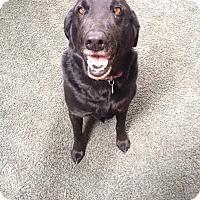 Adopt A Pet :: Lucky & Buddy - Davenport, IA