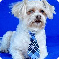 Adopt A Pet :: Leo - Irvine, CA