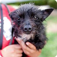Adopt A Pet :: Brenner - San Diego, CA
