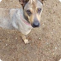 Adopt A Pet :: Athena - Lebanon, ME
