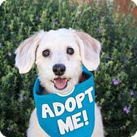 Adopt A Pet :: Samantha Schneagle - Pacific Grove, CA