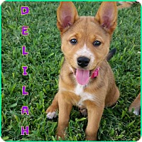 Adopt A Pet :: Delilah - Carrollton, TX
