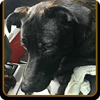 Adopt A Pet :: BINDI - Malvern, AR
