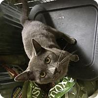 Adopt A Pet :: Boyd - Columbia, SC