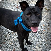 Adopt A Pet :: Mellow - Greensboro, NC