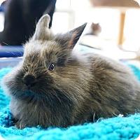 Adopt A Pet :: Rubio - Montclair, CA