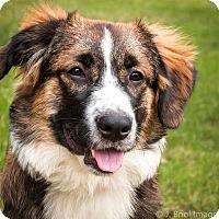 Adopt A Pet :: Marty D3264 - Shakopee, MN