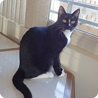Adopt A Pet :: K.B. - Quail Valley, CA