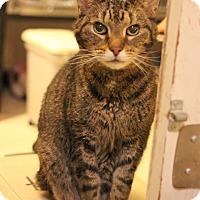 Adopt A Pet :: Otis - Carlisle, PA